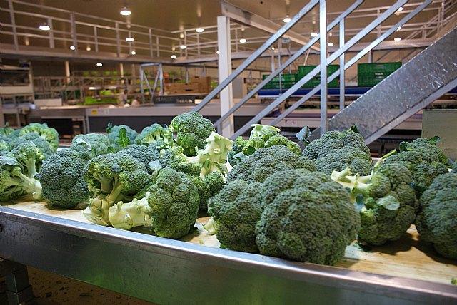 Las buenas prácticas agrícolas consiguen una reducida huella de carbono en el cultivo del brócoli - 1, Foto 1