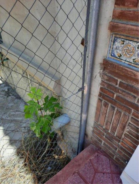 Denuncian el estado ruinoso de una vivienda en Javalí Nuevo - 3, Foto 3