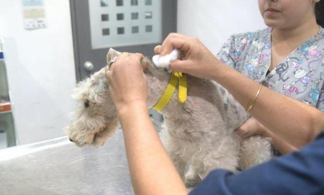Se acuerda la firma de un convenio de colaboración con clínicas veterinarias de Totana para la realizar la campaña de identificación de animales de compañía