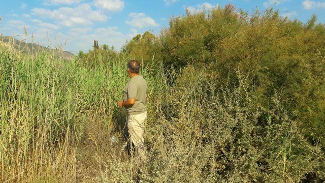 El PP alerta sobre el estado de las ramblas en Lorca; no se ha limpiado ninguna en los últimos dos años y la situación en caso de lluvia fuerte sería de grave riesgo - 3, Foto 3