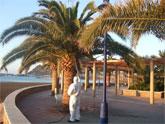 El municipio de Mazarrón lucha contra el picudo rojo