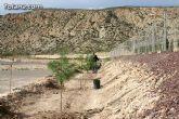 """Plantan 30 árboles autóctonos en la Ciudad Deportiva """"Sierra Espuña"""" para celebrar el 30 aniversario de la Constitución Española - 22"""
