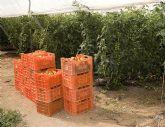 Los agricultores de Mazarrón pueden solicitar ayudas económicas