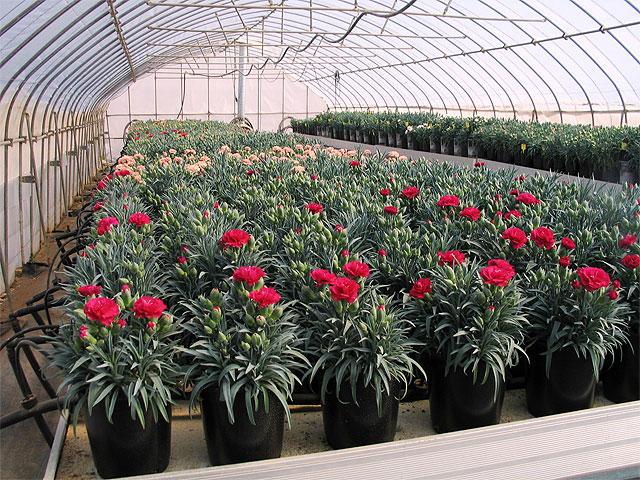 Como sembrar plantas ornamentales en macetas casa dise o for Como cultivar plantas ornamentales