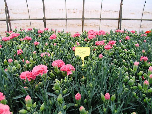 Agricultura investiga nuevos sustratos alternativos para for Produccion de plantas ornamentales