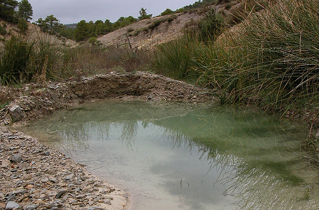 Agricultura solicita la colaboración de los propietarios privados de balsas en Sierra Espuña para la conservación de anfibios, Foto 1