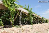 Guardia Civil, Policía Local y vigilantes rurales peinan las zonas de cultivo de uva de mesa - 4