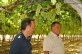 Guardia Civil, Policía Local y vigilantes rurales peinan las zonas de cultivo de uva de mesa - 8
