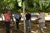 Guardia Civil, Policía Local y vigilantes rurales peinan las zonas de cultivo de uva de mesa - 11