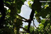 Guardia Civil, Policía Local y vigilantes rurales peinan las zonas de cultivo de uva de mesa - 12