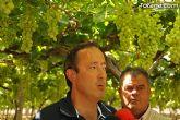 Guardia Civil, Policía Local y vigilantes rurales peinan las zonas de cultivo de uva de mesa - 16