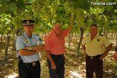 Guardia Civil, Policía Local y vigilantes rurales peinan las zonas de cultivo de uva de mesa - 17