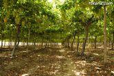 Guardia Civil, Policía Local y vigilantes rurales peinan las zonas de cultivo de uva de mesa - 18