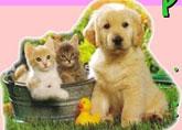 Campaña de vacunaci�n contra la rabia en perros y gatos