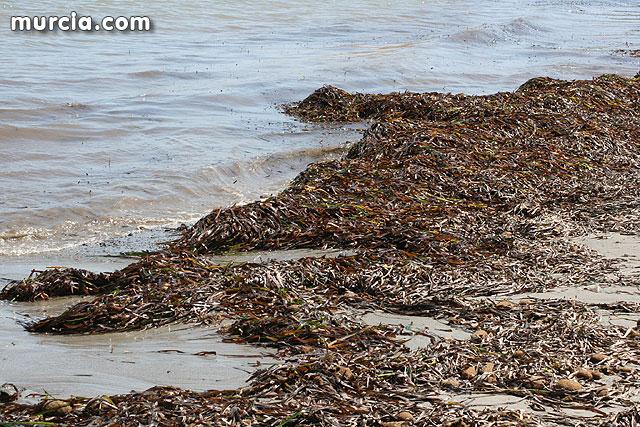blog solo yo, blog diario, solo yo, reflexion, calor, mar, playa, algas, venas, sudor, verano, lo que mal empieza mal acaba, al mal tiempo buena cara,