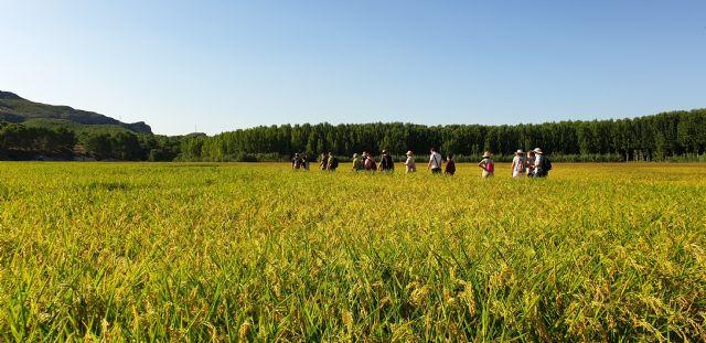 Las rutas del arroz de Calasparra vuelven con los impresionantes parajes de la vega arrocera - 1, Foto 1