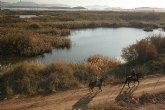 Los humedales de Las Moreras, a un paso de la categor�a 'Ramsar'