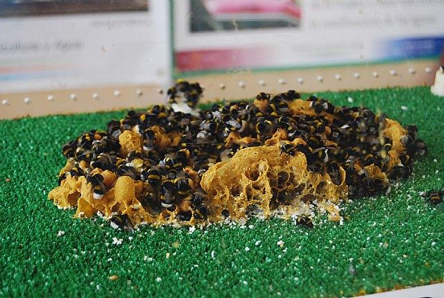 El ayuntamiento de Totana apoyará la creación de un museo de las abejas, Foto 1