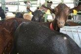 El Consejo Asesor Agrario y Ganadero acuerda volver a organizar la Feria del Campo