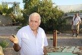 Denuncian numerosos robos de uva en Totana