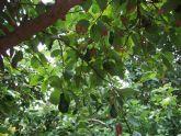 La concejalía de Agricultura apuesta por nuevas alternativas de cultivo