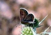 La Consejer�a de Agricultura sensibiliza sobre la importancia de las mariposas en Sierra Espuña