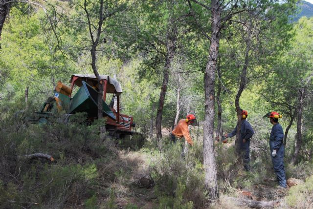An environmental project will prevent forest fires and increase the diversity of the flora and fauna on the site of the shrine of the Holy - 3
