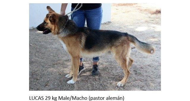 El Núcleo Zoológico Sierra Ascoy impulsa una campaña de adopción de perros - 1, Foto 1