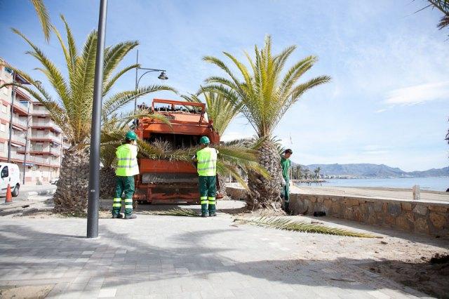Podan las palmeras del Paseo del Puerto y de la Avenida Doctor Meca, Foto 1