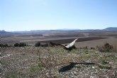 Agricultura libera cinco buitres leonados en la sierra de Mojantes tras su paso por el Centro de Recuperaci�n de Fauna Silvestre
