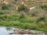 IU-Verdes pone en evidencia la nefasta depuración de aguas, demostrando la contaminación en el lecho del Río Guadalentín - 3