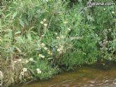 IU-Verdes pone en evidencia la nefasta depuración de aguas, demostrando la contaminación en el lecho del Río Guadalentín - 6