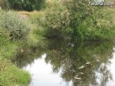 IU-Verdes pone en evidencia la nefasta depuración de aguas, demostrando la contaminación en el lecho del Río Guadalentín - 9