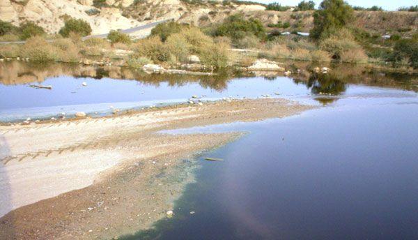 El concejal de Agricultura y Agua lamenta que la CHS no asuma las labores de limpieza, mantenimiento y fumigación del Río Guadalentín durante los meses del verano, Foto 1