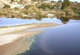 El concejal de Agricultura y Agua lamenta que la CHS no asuma las labores de limpieza, mantenimiento y fumigación del Río Guadalentín durante los meses del verano