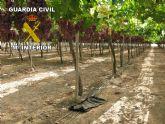 La Guardia Civil detiene a 2 personas que habían robado 1200 kilos de uva en una explotación agrícola de Totana