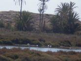 PADISITO participó el pasado domingo 9 de octubre en el Dia Mundial de las Aves, visitando el Parque Regional de Calblanque - 13
