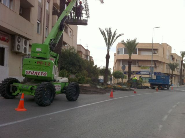 They begin the work of pruning and spraying palm trees in parks and urban gardens - 2