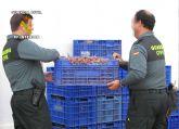 La Guardia Civil detiene a dos personas que habían sustraído una tonelada y media de uva en Totana