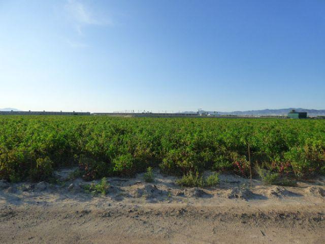 Denuncian una roturación ilegal en los Saladares del Guadalentín - 2, Foto 2