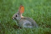 Agricultura solicita a los agricultores informes sobre los daños causados por la plaga de conejos
