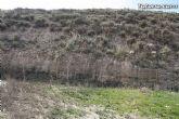 Finalizan los trabajos del proyecto Restauración y Gestión de la Rambla de Lébor como conector ecológico entre las sierras de la Lercia-Espuña y Río Guadalentín - 13