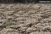 Finalizan los trabajos del proyecto Restauración y Gestión de la Rambla de Lébor como conector ecológico entre las sierras de la Lercia-Espuña y Río Guadalentín - 15