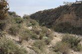 Finalizan los trabajos del proyecto Restauración y Gestión de la Rambla de Lébor como conector ecológico entre las sierras de la Lercia-Espuña y Río Guadalentín - 17