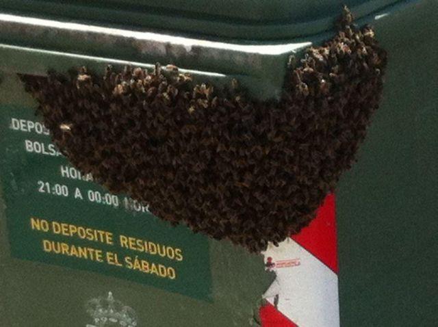Protección Civil retira un enjambre en un contenedor ubicado en la calle Virgen de Montserrat, Foto 1