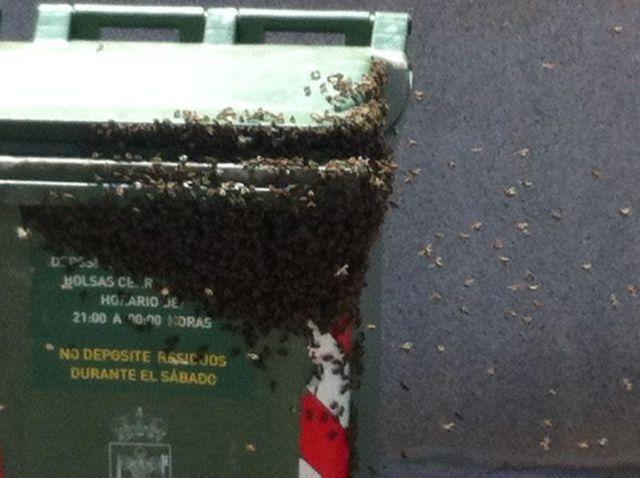 Protección Civil retira un enjambre en un contenedor ubicado en la calle Virgen de Montserrat, Foto 2