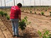 Agricultura apoya la diversificación de cultivos en el municipio de Mazarrón  como alternativa al monocultivo del tomate