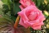El PSOE luchar� para que el IVA no aumente en el sector de la flor y plantas ornamentales
