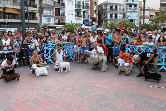 150 perros compiten en el I concurso nacional canino de Mazarrón, Foto 1