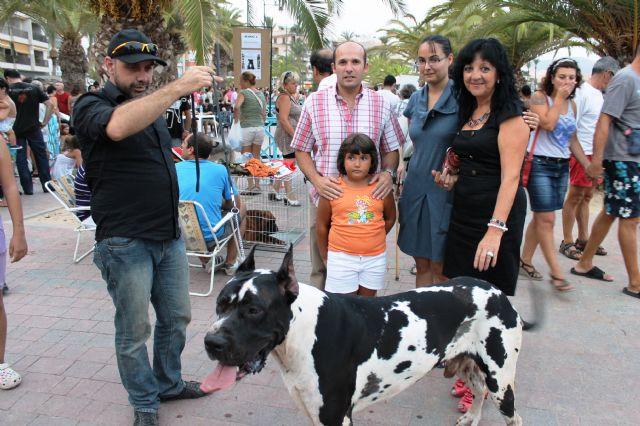 150 perros compiten en el I concurso nacional canino de Mazarrón, Foto 2